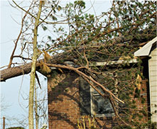 Image of a home damaged by a fallen tree
