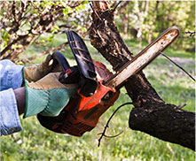 Image of a tree care specialist trimming a tree