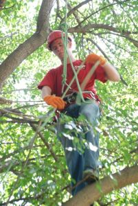 Save Your Trees Hire a Professional Tree Trimmer