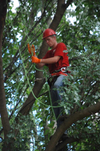smittys-tree-removal-evergreen-park