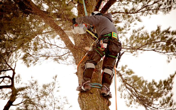 tree-pruning-service